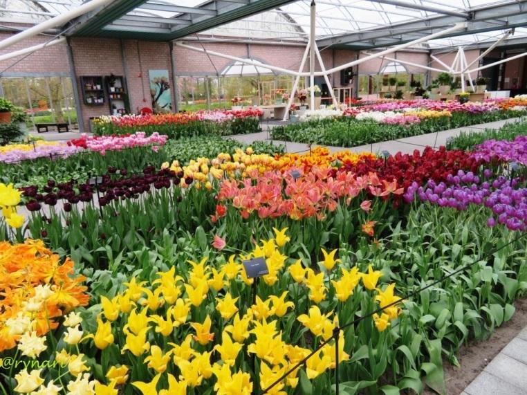 Aneka koleksi tulip di anjungan Willem Alexander