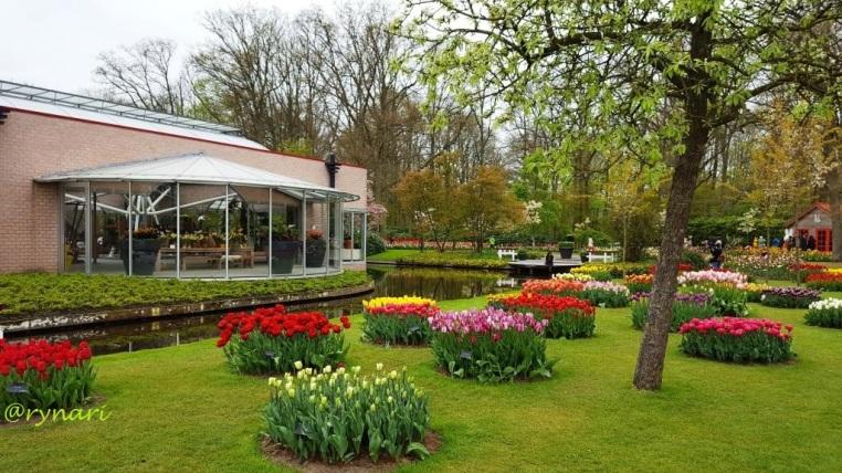 Tulip dan taman ceplok individual