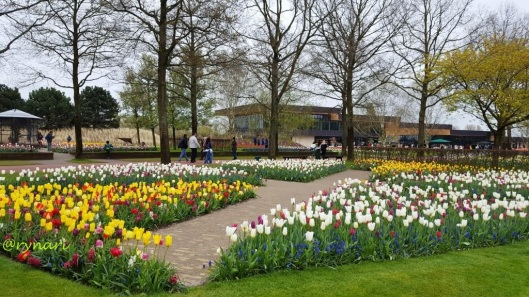 Tulip dan taman pola segitiga